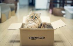 Box Sweet Cat Photo