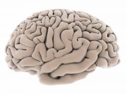 """The New Art and Science Behind Enhanced Brain Performance"" (Encore presentation.)   Public Radio Tulsa"