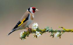 Colorful Birds Wallpaper: Hd Colorful Bird On Flowering Branch Wallpaper Download Free 1920x1200px