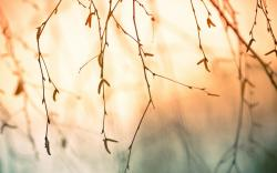 """Download the following Tree Branch Wallpaper 44192 by clicking the orange button positioned underneath the """"Download Wallpaper"""" section."""