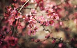 Branches Spring Flowers Pink Nature