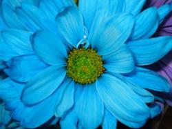 Bright Blue Flowers; Bright Blue Flowers ...
