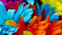 Images for Gt Bright Colorful Flowers Wallpaper