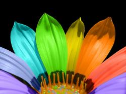 Bright Colors Colorful flower ♥