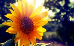 Bright Flowers; Bright Flowers ...