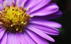 Beautiful Bright Flower; Bright ...