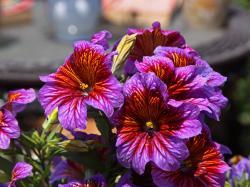 Bright Flowers - 2009-06-14