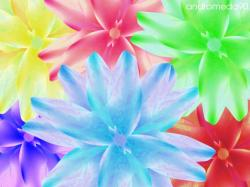 Bright Wallpaper: Cool Bright Flower Wallpaper 1024x768px
