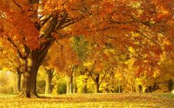 Yellow autumn scenery