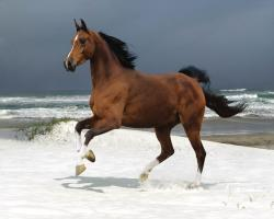 Reddish Brown Horse 1280x1024 2963