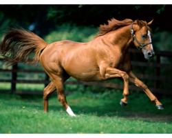 ... Brown Horse Running Desktop Wallpapers. These desktop wallpapers are high definition and available in wide range of sizes and resolutions.