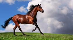 Free Brown Horse Wallpaper