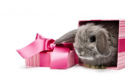 Sweet Bunny Gift HD wallpapers