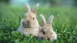Bunny Wallpaper HD