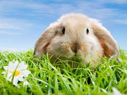 Bunny Wallpaper 39766