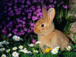 Bunny Rabbits Bunny Wallpapers