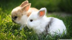 Cute Bunnies Wallpaper Full HD ...