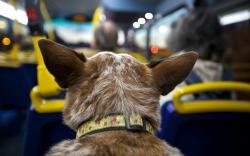 Bus Dog Trip