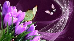 Wallpaper Tags: stars tulip crocus butterfly sparkle pink silk spring purple butterflies