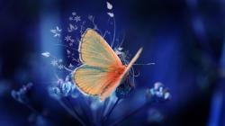 Butterflies HD Wallpapers-1