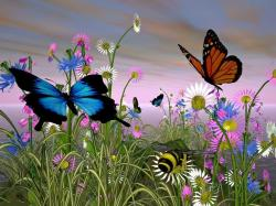 Advertisements. Wallpaper : nature with butterfly ...