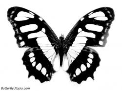 butterfly coloring picture ...