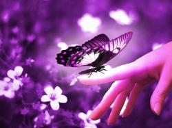 The Butterfly's Speech at The United Nations General Convention For All Winged Creatures. '