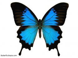 Butterfly Wallpaper - butterflies Wallpaper