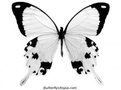 butterfly coloring picture · butterfly coloring crafts ...