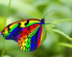 Rainbow butterfly HQ WALLPAPER - (#117826)