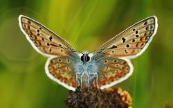 Close-Up Butterfly Wings HD Wallpaper