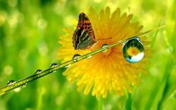 Butterfly flower waterdrop
