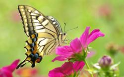 Butterfly Flower Butterflies Primary Category Animals