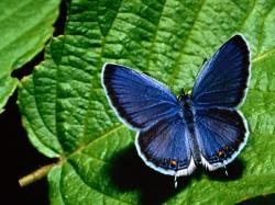 Butterfly - insects