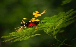 DOWNLOAD: butterfly-grass-color-plants-insects free picture 2560 x 1600