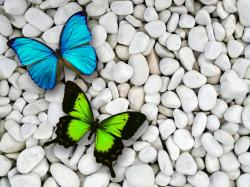 Butterfly Wallpaper · Butterfly Wallpaper ...