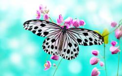 HD Wallpaper | Background ID:324873. 2560x1600 Animal Butterfly