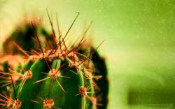 Cactus Cacti Wallpaper