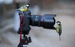 Camera Birds Wallpaper in 1680x1050 Widescreen