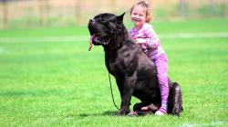 Cane Corso Zeder Sangue Magnifica with kid