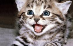 Cute Cat Smile