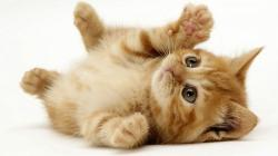 Take your time!! little_cute_cat_1920x1080