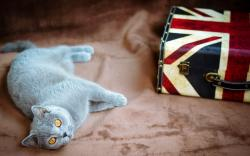 Cat Bag Flag United Kingdom