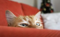 Cat behind sofa