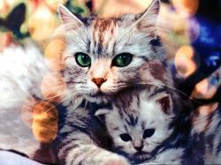 And the original cat photo