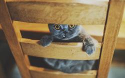 Cat Chair Look