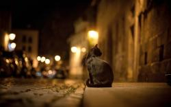 Cat City Street Night Lights