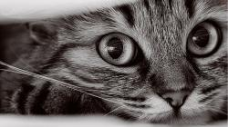 cat picture 1920x1080 with tagme breed solo lying whiskers highres looking at viewer close-up
