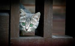 Cat eyes fence Wallpapers Pictures Photos Images. «