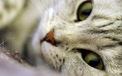 Cat Eyes Zoom